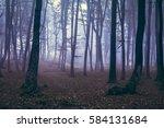fairy tale spooky scene in... | Shutterstock . vector #584131684