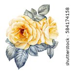 Yellow Roses Watercolor...