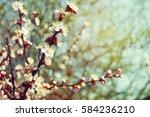 blossom tree   Shutterstock . vector #584236210