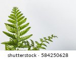 fresh fern branch in front of... | Shutterstock . vector #584250628