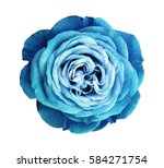 Turquoise Rose Flower White Isolated - Fine Art prints