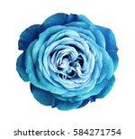 Turquoise Rose Flower. White...