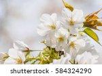 spring flowers series ...   Shutterstock . vector #584324290