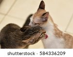 Cats Grooming Or Licking Each...