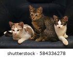 Cute Domestic Cat Resting On A...