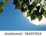 green fresh leaves of trees on...   Shutterstock . vector #584357818