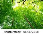 leaves of fresh green. leaves... | Shutterstock . vector #584372818