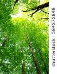leaves of fresh green. leaves... | Shutterstock . vector #584372848