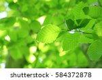 leaves of fresh green. leaves... | Shutterstock . vector #584372878
