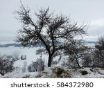 Klar Apple Tree In Snow In...