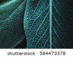 sage leaves | Shutterstock . vector #584473378