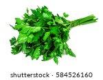 bunch of fresh  green parsley... | Shutterstock . vector #584526160