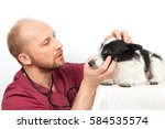Veterinary Doctor Examines A...