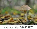 mushroom in the forest | Shutterstock . vector #584585770