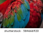 green winged macaw  ara... | Shutterstock . vector #584666920