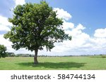 one green tree and grass field... | Shutterstock . vector #584744134