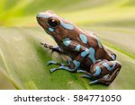 tropical poison dart frog from... | Shutterstock . vector #584771050