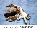 Stock photo the kittens are eating into the mother s milk of cats 584803303