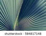 natural texture of pleated... | Shutterstock . vector #584817148