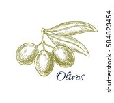 olives sketch of vector olive... | Shutterstock .eps vector #584823454