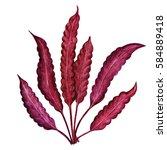 Watercolor Red Seaweed Close U...