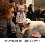 new york city   february 14... | Shutterstock . vector #584894944