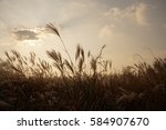 silver grass field after sunset | Shutterstock . vector #584907670