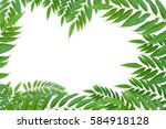 leaf isolate and white... | Shutterstock . vector #584918128