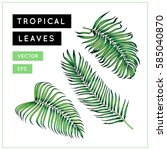 Palm Tree Leaves Set. Tropical...