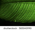 green fresh leaf with water... | Shutterstock . vector #585043990