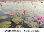 redlotussea nong han kumphawapi ... | Shutterstock . vector #585108538