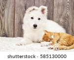 Stock photo berger blanc suisse puppy and kitten fluffy carpet 585130000