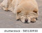 Cute Sleeping Dog On The Street