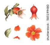 Watercolor Pomegranate Blossom  ...