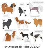 Stock vector miniature toy dog breeds collection isolated on white flat style vector illustration 585201724