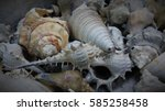 Sea Shells Were Collected From...