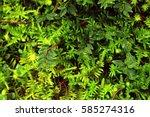 green nature | Shutterstock . vector #585274316