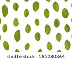 green leaves pattern isolated... | Shutterstock . vector #585280364