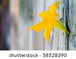 Flower growing from the wood - stock photo