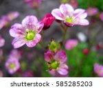 pink blossom  | Shutterstock . vector #585285203