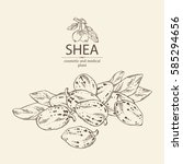 background with shea nut.... | Shutterstock .eps vector #585294656