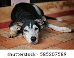 Old Dog Sleep On The Floor