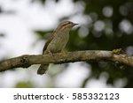 eurasian wryneck | Shutterstock . vector #585332123