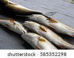 Small photo of Redfish caught at Lafitte, Louisiana, lying on a table and ready to fillet