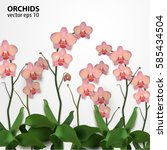 flower orchids isolated on... | Shutterstock .eps vector #585434504