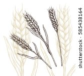 Wheat Ear Vector Illustration....