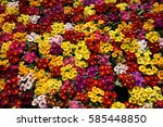 Stock photo flowers background 585448850