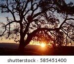 Sunset Behind Oak Tree