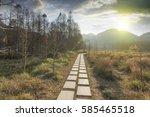 sunset in the woods corridor | Shutterstock . vector #585465518