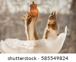 Close Up Of Red Squirrel With ...